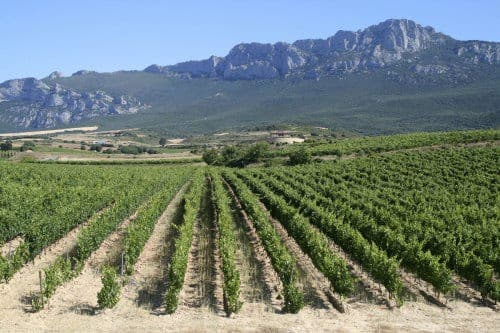 Spanish push to protect endangered local grape varieties