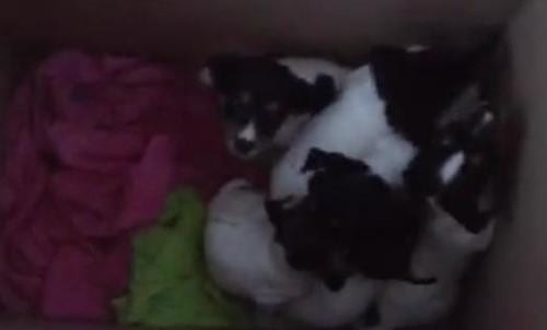 VIDEO: Puppies abandoned outside expat's home