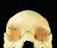 burgos skull