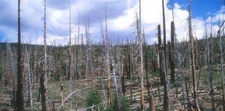 burnt forest e