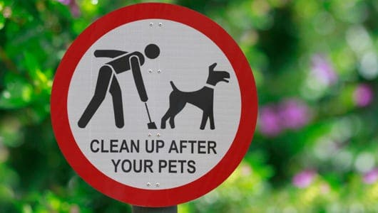 DNA testing reduces amount of dog poo left on pavements in Xativia