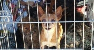 dogs could now be put down after owners evicted from home