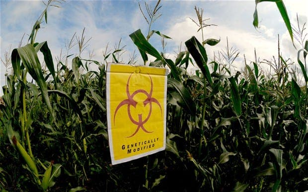 Europe expected to give green light to GM crops in vote