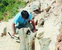spain finds huge dinosaur femur