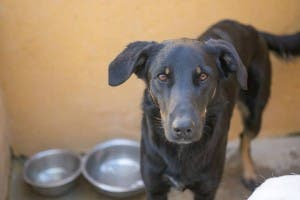 DEATH SENTENCE: 30 dogs to be put down