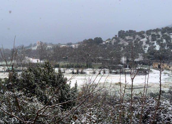 ronda snow IMG