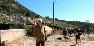 AJS goat