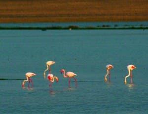 AVIAN PARADISE: Flamingos