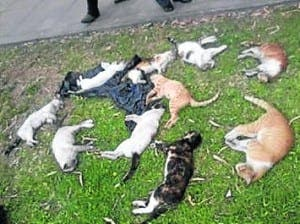 TRAGIC: Cats found dead in a street and disposed of in bins