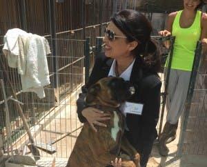 Mijas animal shelter