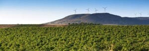 Spanish winery - valdepenas