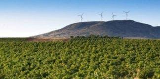 Spanish winery valdepenas e