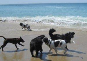dog-beach-spain