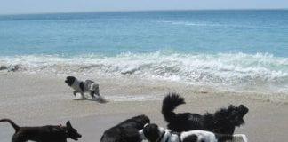 dog beach spain