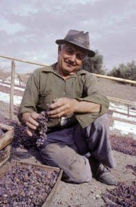 Preparing raisins