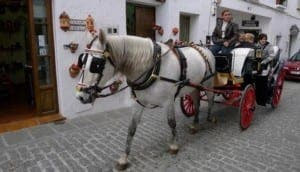 Tourist carriage horse in Marbella