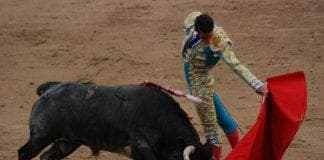 Bullfighting e