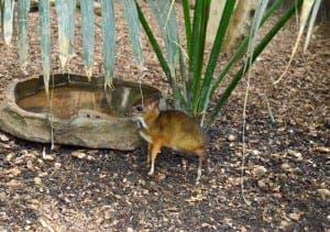 Little deer next to a big pond