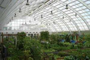 heatstroke_greenhouse