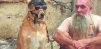 Dog abuse malaga e