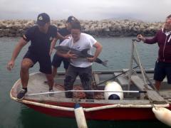 Gibraltar Dolphin