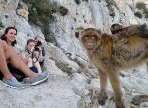 Gibraltar's Barbary macaques