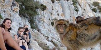 monkeysgibraltar  e