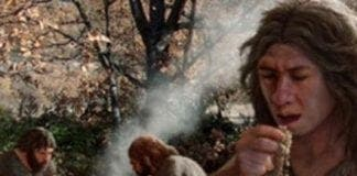 neanderthals cooked food e