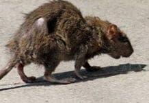 rat e