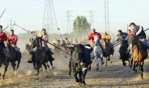 Men on horses attempt to spear bull to death in Valladolid event