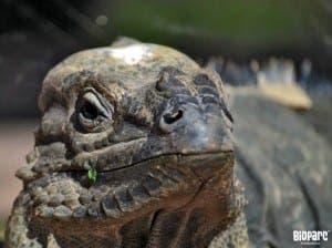 BIOPARC FUENGIROLA: Rhinoceros iguana