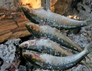 san-pedro-fish