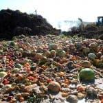 composting-waste-site