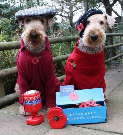 poppy-dogs