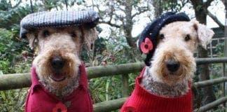 poppy dogs e