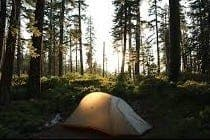 tent forest e