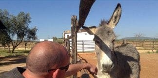 donkey Alan Parks at El Refugio del Burrito