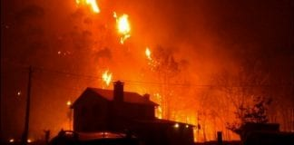 forest fires e