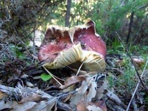mushroom-P1070170