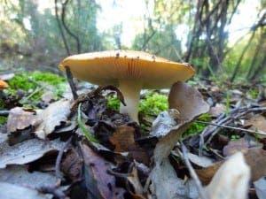 mushroom-P1070196