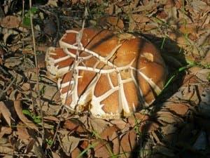 mushroom-P1070208