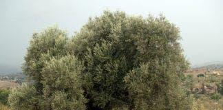 Tree huggers e