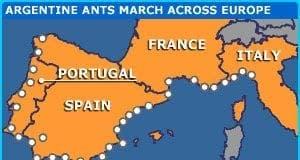 europe ants