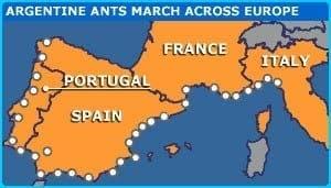 europe-ants