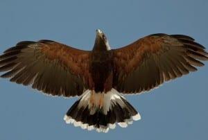 Eagle story (1)