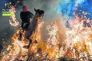 Horses run through fire in Madrid