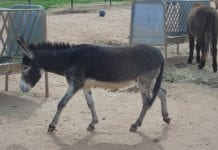 donkey  e