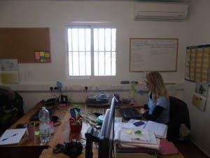 donkey-office