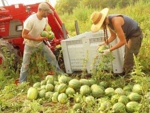 PICKERS: Twisting my melon, man