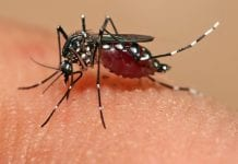 zika virus mossie e